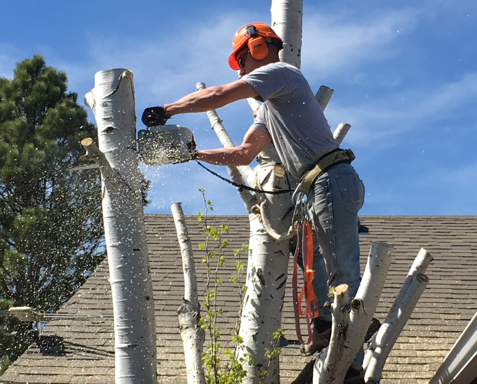 How Can You Find a Reliable Tree Removal Service in Billings, MT?